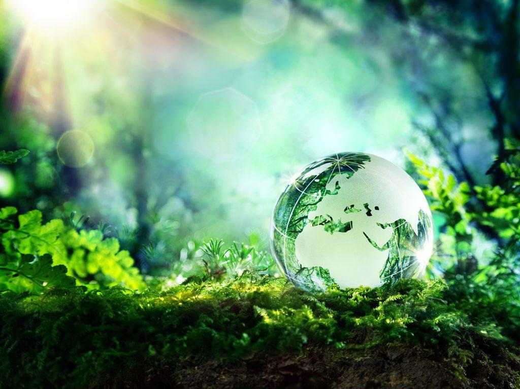世界の緑化につながるプロジェクト「plaNTnetのある風景」とは?