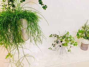 夏こそ『TOKYO 5% GREEN』プロジェクト!② 旅行に行った際のGREENの管理方法