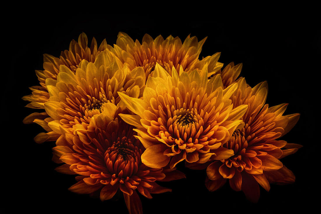 1日6円?!美しくてコスパも優秀。仏花をハーバリウムに変えない理由がない!!