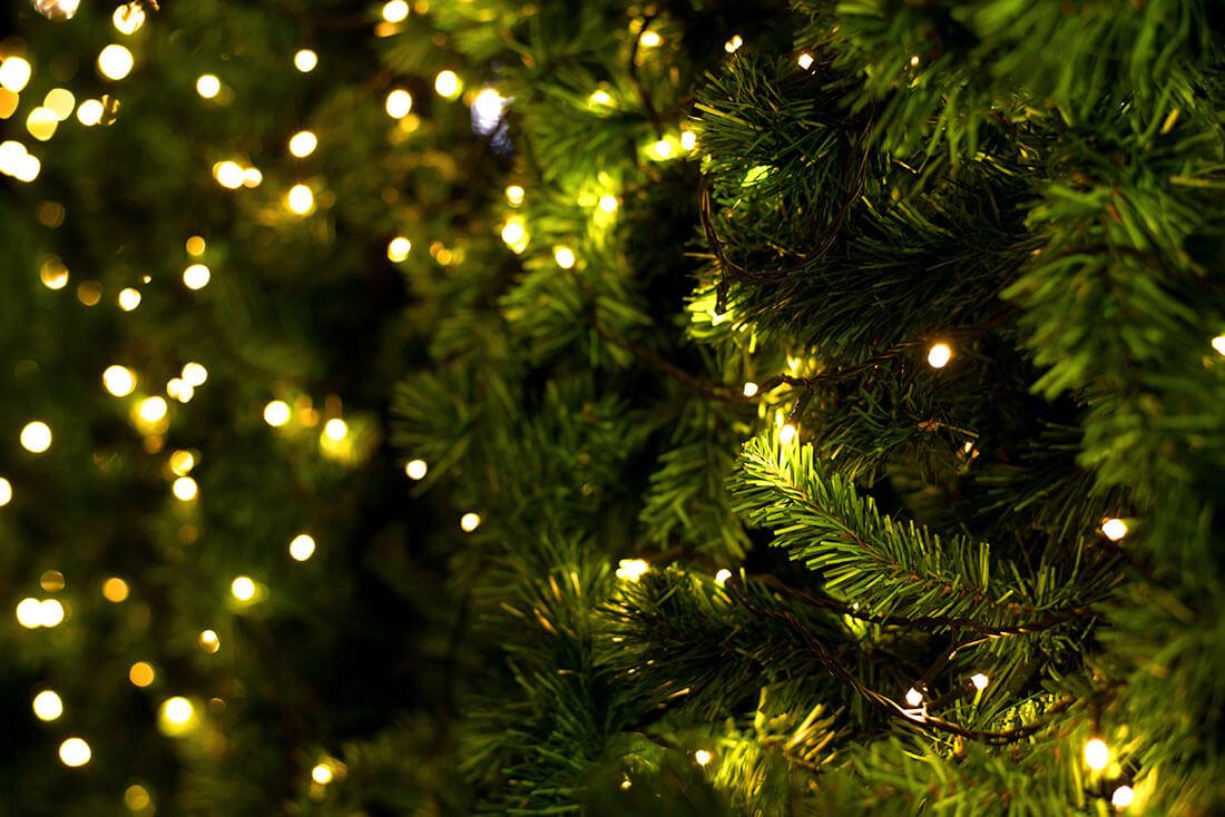 【海外イベント】フランスのクリスマスに欠かせないもみの木、そのいわれとは?