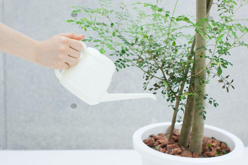 【期間別】留守中も安心、留守中の水やり方法。少しでも長く水を保たせるコツも