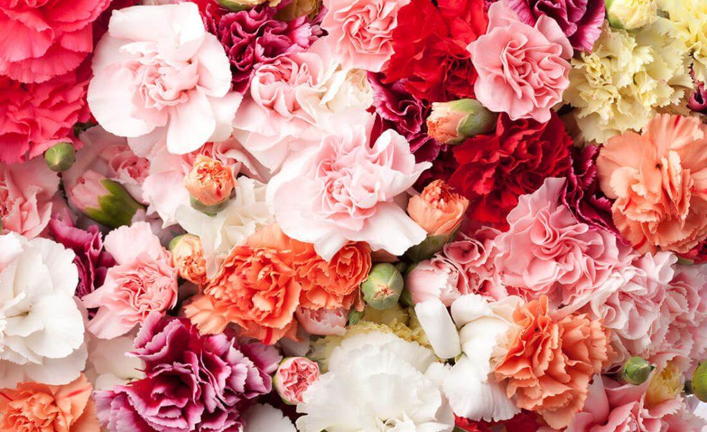 母の日に贈る花10種!ギフト向けな花の種類と花言葉を解説