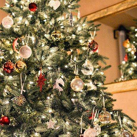 オレゴン産モミの木Oregon Abies Firma / 180∼210cm(6~7feet)